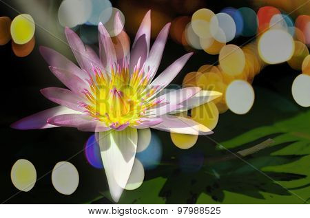 Double Exposure,lotus With Light And  Bokhe.