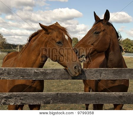 Two beautiful horses behind a fence.