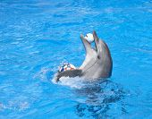 Huppy dancing dolphin with balls at pool poster