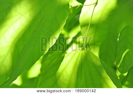 Abstract green leaf texture for your background