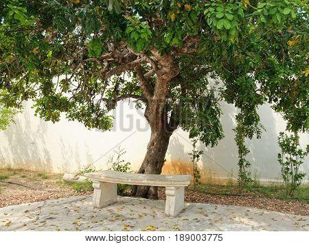 Stone bench under green tree in garden