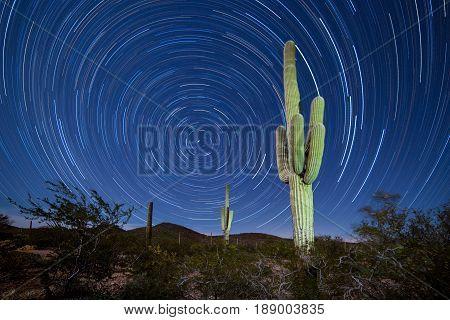 Saguaro Cactus Startrails Nightsky Landscape
