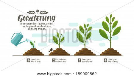 Growing plant. gardening, horticulture infographic. Agriculture farming development nature concept