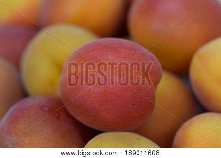 Close view on the pile of fresh ripe Prunus armeniaca fruit