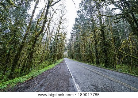 Hoh Road in the Hoh rain forest at Olympic National Park