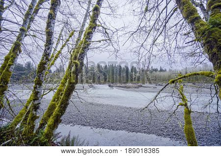Beautiful rain forest trees at Hoh River