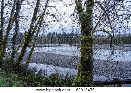 Hoh River in the rain forest of Olympic Peninsula Washington