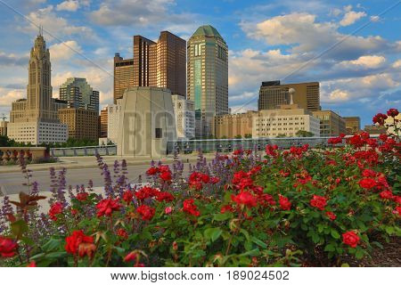 Columbus, Ohio during golden hour with roses in the foreground