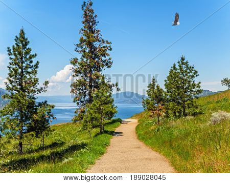 Mountain hiking trail overlooking the lake Bald Eagle soaring above