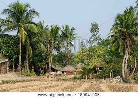Traditional houses of clay on area Sundarbans National Park in the biggest delta of the Ganges River in India West Bengal