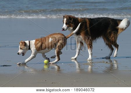 Dogs and owner playing fetch at Dog Beach