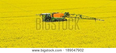 Tractor spraying rape field by herbicides, pesticides or insecticides. Modern agriculture. Rape is used to fuel like ingredient