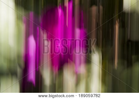 Abstraction using a magenta flower and movement