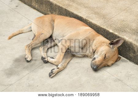 street dog is sleeping in thailand. hopeless