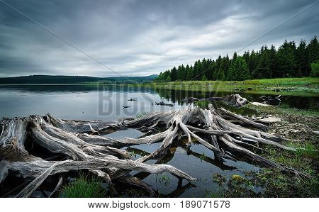 Beautiful water tank Prisecnice in Ore mountains Czech republic. Detail of tree roots in clear water. Typical autumn rainy weather.