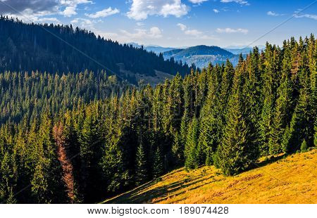 Classic Carpathian landscape. Autumn landscape in mountains of Romania. Conifer forest on hillsides of Apuseni National Park. Fresh and green trees in evening light under blue sky with clouds