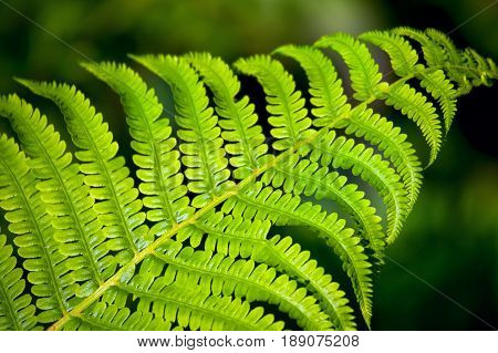 Young fern plants in nature. Close up