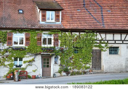 The facade of an old half-timbered house overgrown with green ivy. Germany.