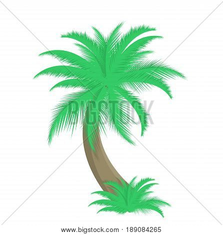 Palm tree with geen leaves vector illustration isolated on white background