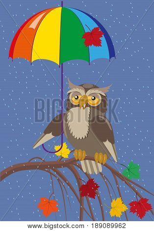 Owl under an umbrella on a branch against the background of autumn rain, colored maple leaves, vector illustration