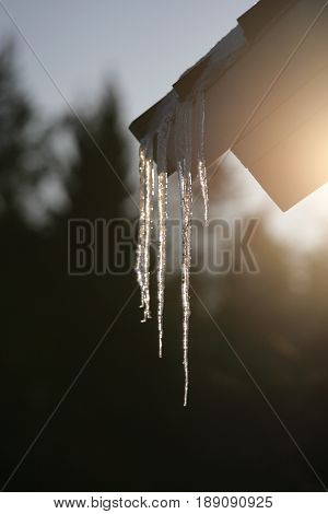 Melting icicles hanging from roof eaves in spring.