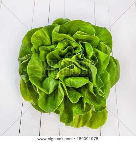 Butterhead salad isolated on white table close