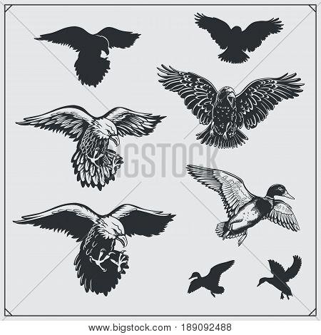 Set of birds. Ravens, eagles and ducks.