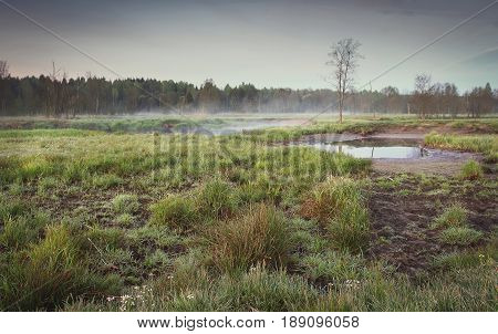 A melancholic landscape of a sad nature in a misty morning in gray and dark colors. Nobody only grass, a lonely tree, sadness, forest and fog in the background of the faded sky.