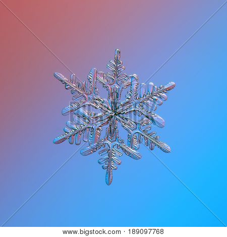 Real snowflake macro photo: stellar dendrite snow crystal with relief surface, six ornate arms with many side branches and fine symmetry. Snowflake glitters on smooth pink - blue gradient background.