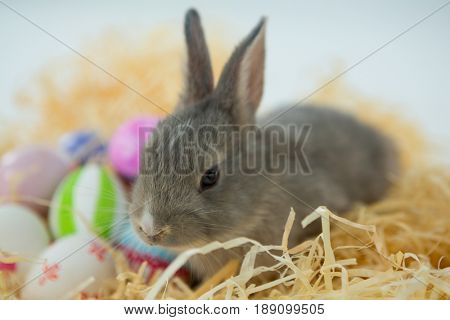 Close-up of Easter eggs with Easter bunny in nest