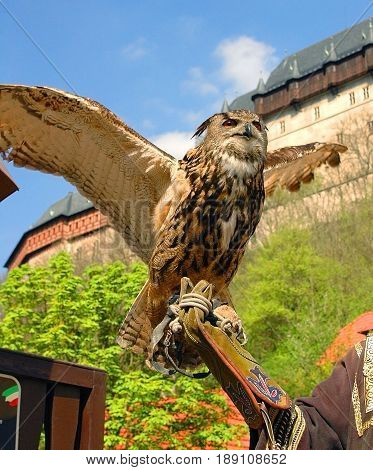 Brown owl is seating on man hand at Karlstejn castle. Beautiful brown gray wild owl. Famous sightseeing places holidays vacations