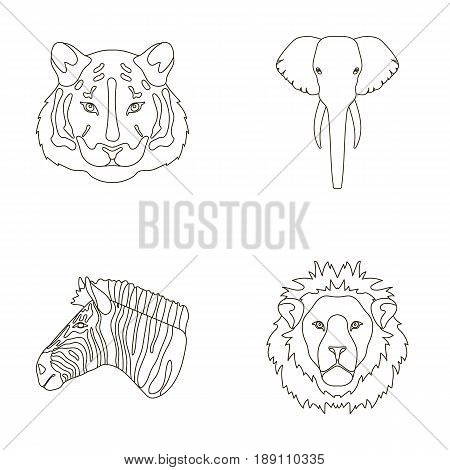 Tiger, lion, elephant, zebra, Realistic animals set collection icons in outline style vector symbol stock illustration .