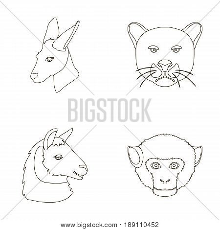 Kangaroos, llama, monkey, panther, Realistic animals set collection icons in outline style vector symbol stock illustration .
