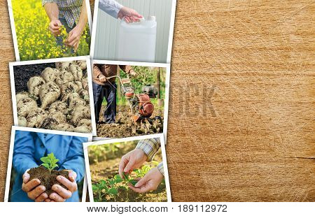 Agriculture and farming photo collage on wooden background as copy space