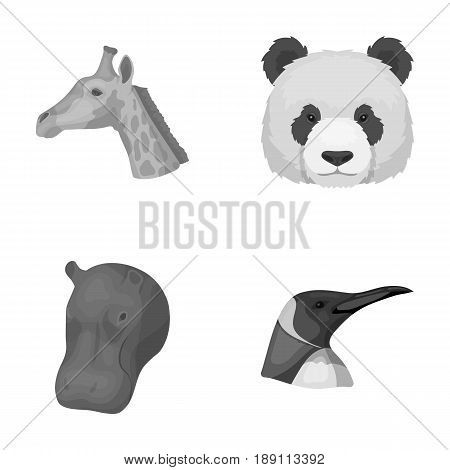 Panda, giraffe, hippopotamus, penguin, Realistic animals set collection icons in monochrome style vector symbol stock illustration .
