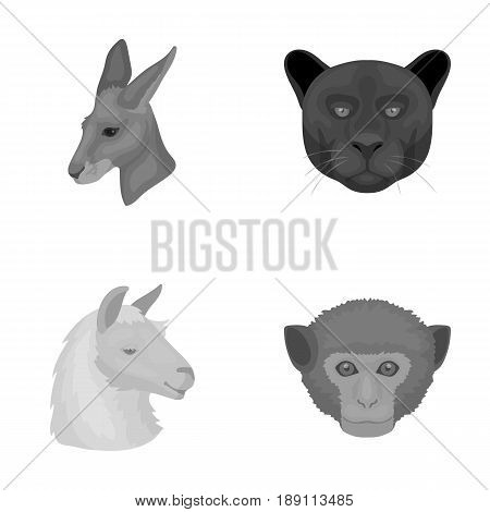 Kangaroos, llama, monkey, panther, Realistic animals set collection icons in monochrome style vector symbol stock illustration .