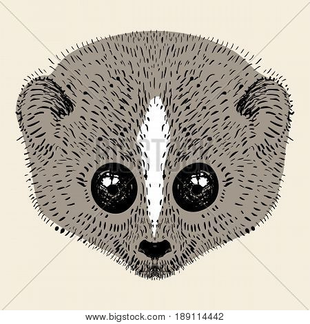 Loris head , hand drawn illustration