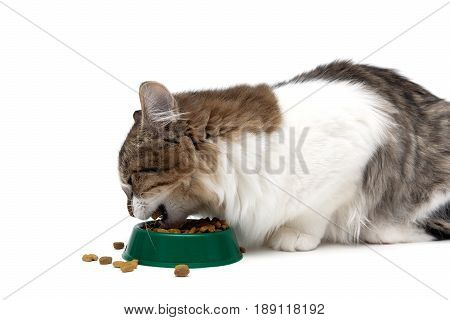 cat eats dry food from a bowl on a white background. Horizontal photo.