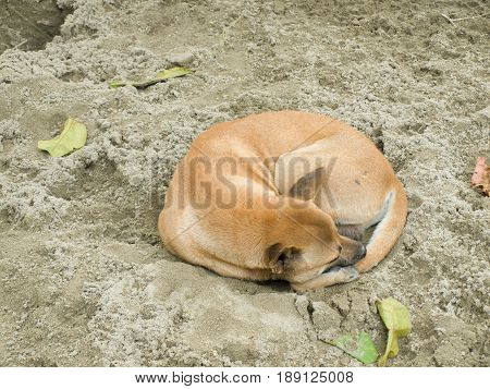 COLOR PHOTO OF STRAY DOG SLEEPING ON SAND
