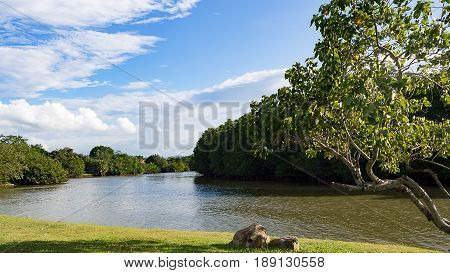 Tree and stone near river in park with mountain in background. Aura sunlight reflect with river water.