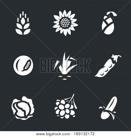 Wheat, sunflower, corn, soybeans, rice, peas, cabbage, coffee, banana.