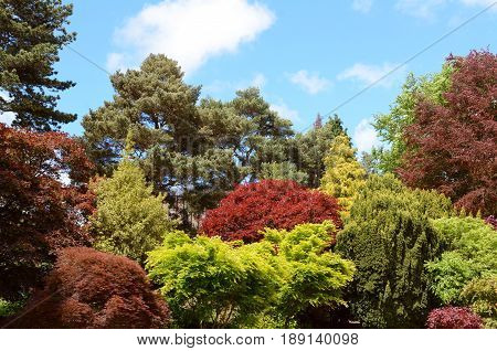 Ornamental Trees And Shrubs With Red And Green Foliage