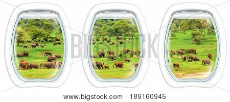 Three porthole frame windows on African elephants in Tarangire National Park Tanzania on green grass savanna, Tanzania. Safari and travel concept.