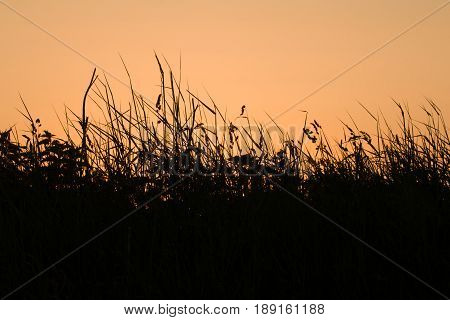 Grasses and wild flowers silhouetted against orange sky at dawn