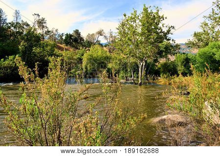 Riparian Woodland surrounding the Kern River taken in the Sierra Nevada Mountain Foothills, CA