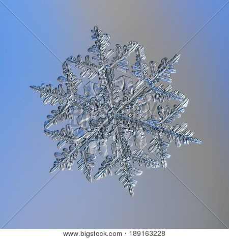Real snowflake macro photo: large stellar dendrite snow crystal with complex structure, fine symmetry and six glossy, relief arms with many side branches. Snowflake glitters on bright blue background.
