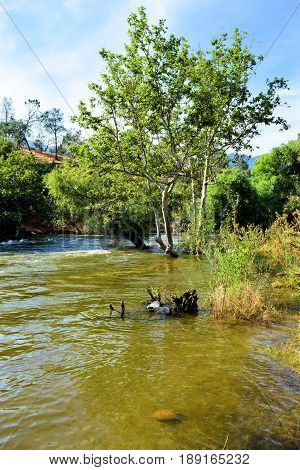 River overflowing its banks from the Sierra Nevada Mountains snowmelt during spring taken in the Kern River, CA