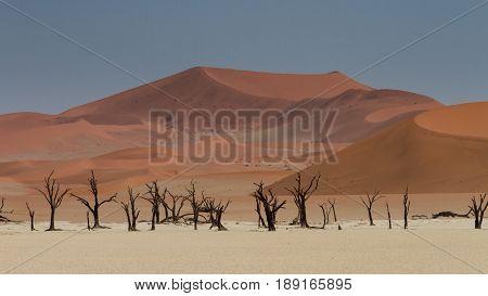 Dead trees at the Dead Vlei salt pan Namibia Africa