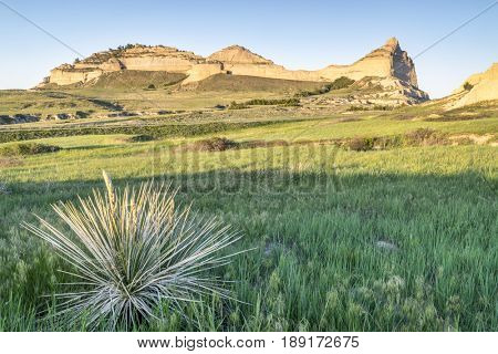 Scotts Bluff National  Monument in Nebraska, spring scenery with sunset light and yucca plant