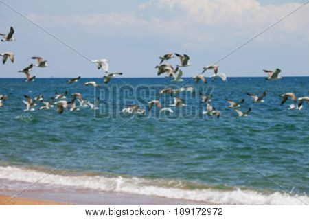 Blurred view of flock of seagulls flying over sea at sun summer day. Use as background